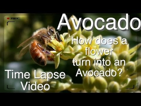 how to cut an avocado into a flower