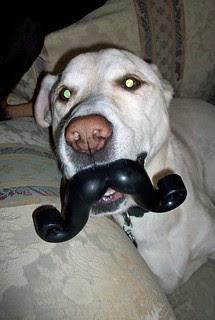 Zeus_mustache_102512