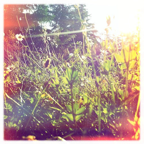 Meadow's flowers.