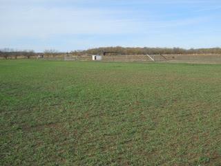 More Wheat 2012 Dec 17