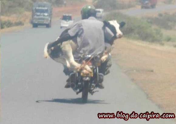 transportando o animal para consulta