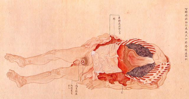 Edo-period medical illustration --