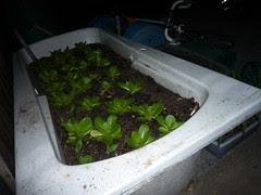 gardening at night
