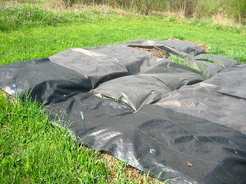 cooking lasagna garden beds