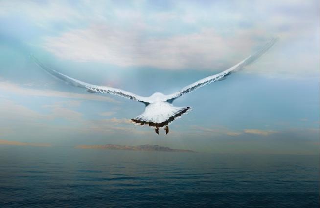 Risultati immagini per uccello nel vento