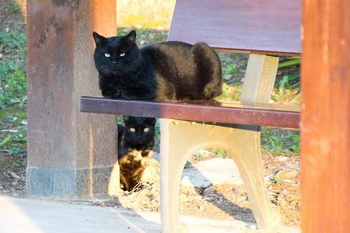 Gatos negros...