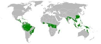 Tropical Evergreen Forest Map And Names Of Tropical Evergreen Forests