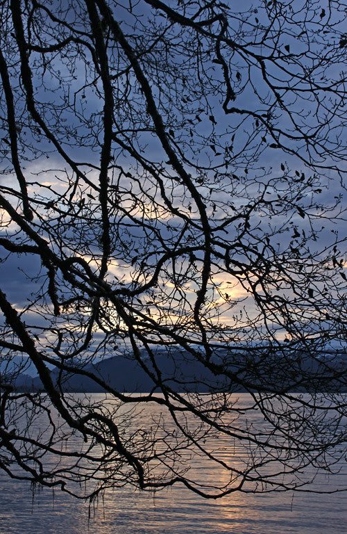 sunset with tree limbs, Kasaan, Alaska