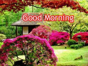74 Nature Beautiful Good Morning Images Pictures Hd Download