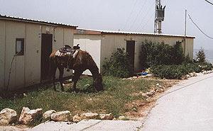 http://settlementsofisrael.netzah.org/images/adei-ad.jpg