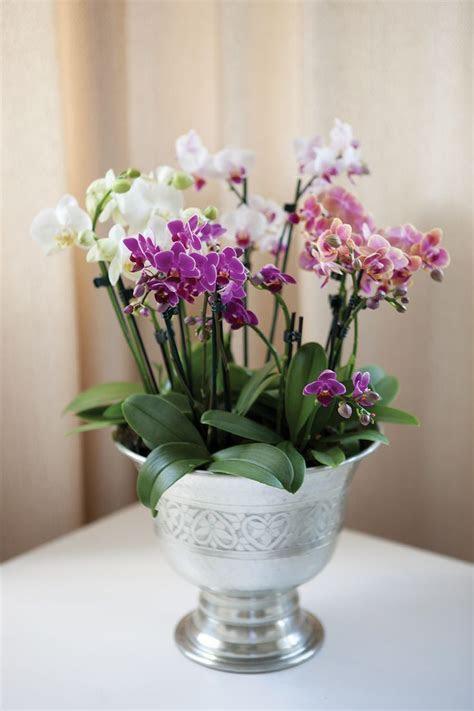 Mini orkideer i champagnekjøler: http://www.mestergronn.no