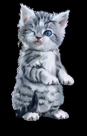 Kucing Lucu Png