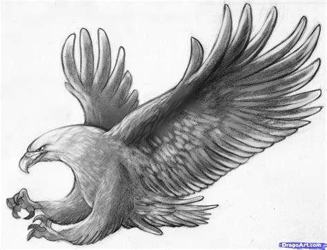 sketch  eagle  pencil draw  eagle bird step
