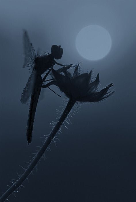 nature - doesn't this look like a fairy???