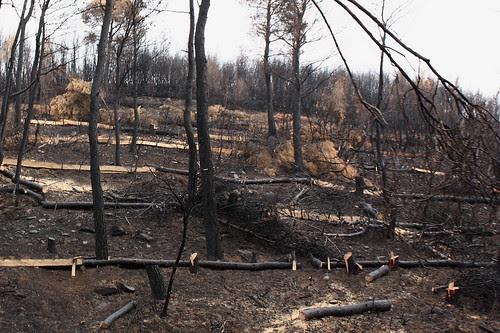 Burnt field at Stamata