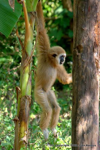 Little Friend in the jungle