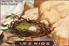 les nids 10