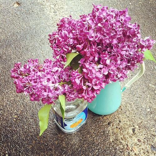 Lilacs by jenib320