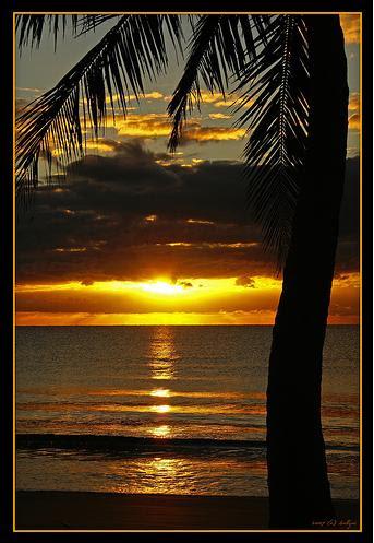 Пальма в роли естественной рамки