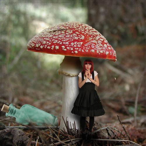 A New Alice by Lynne Larkin