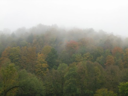fog and foliage
