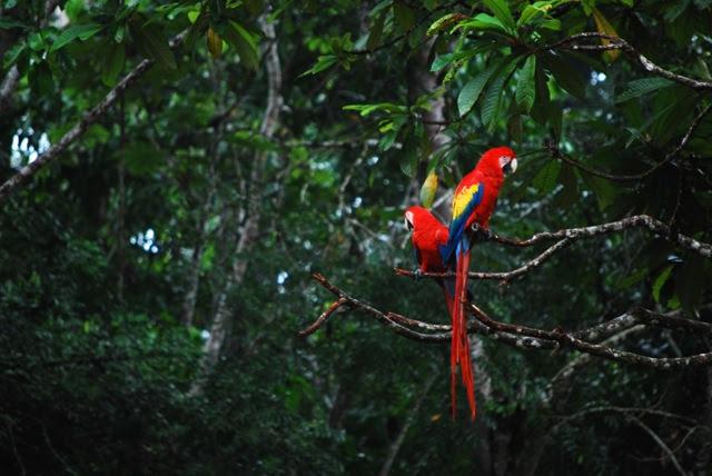 Colorear Juntas La Selva La Huella Del Jaguar