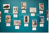 photo Catcafe-14_zps95487dd6.jpg