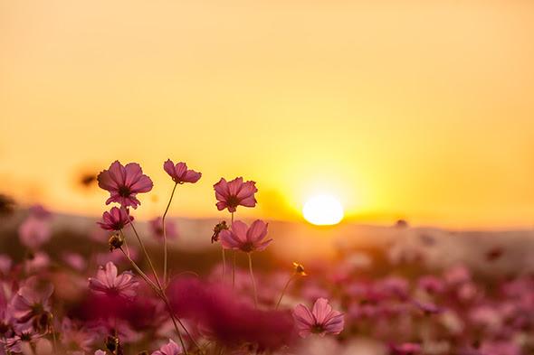 Resultado de imagem para nascer do sol no campo