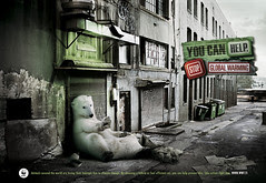 Homeless Polar bear