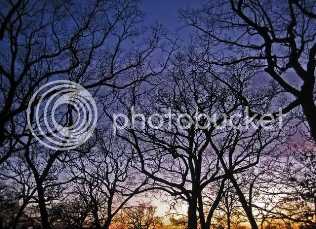 winter sunset 09