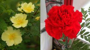 tipos de flores con aroma