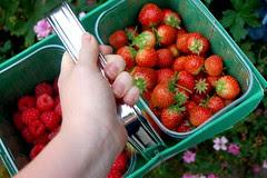 fruit picking 1