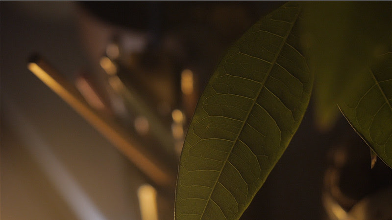 leaf - GH3