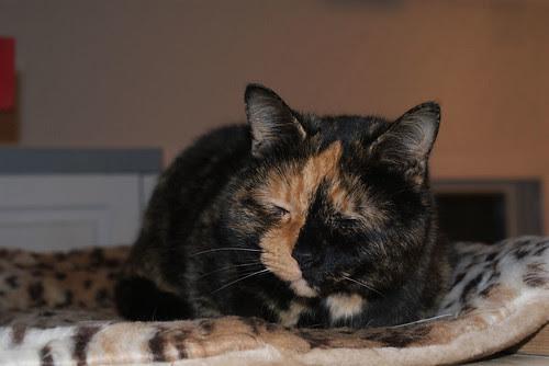 Kitty City Cat LeLe