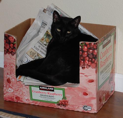 buddah-in-box