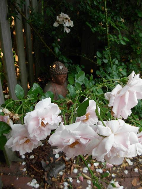 18 from my garden as I take a break