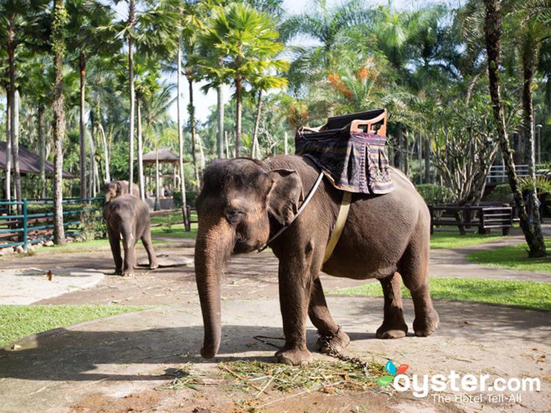 Bucket list travel experiences - Business Insider