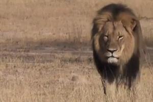 Cecil the lion.