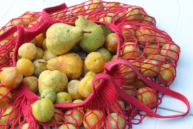 photo 29-bretagne jardin fruits prune poire pomme_zpsx4uip81r.jpg