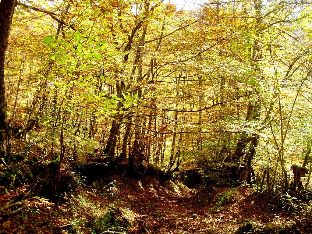 Bosque de Lindes 010