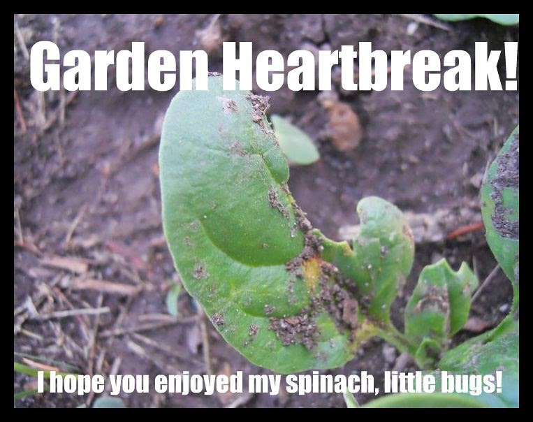 Garden Heartbreak