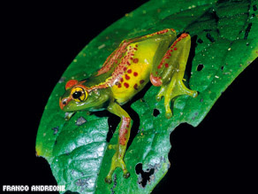 A study has found nearly 200 new species of frogs in Madagascar.
