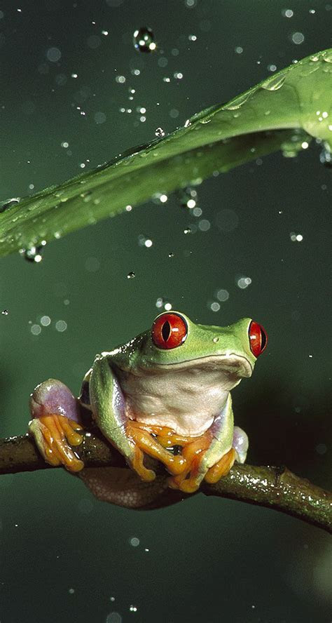 awesome frog  rain  iphone wallpapers
