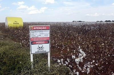Agrotoxicos - plantaçao de algodão em sorriso.jpg