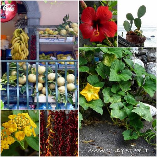 fiori, profumi e colori