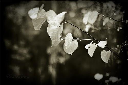 My sneaking tears by Eva Psarrou