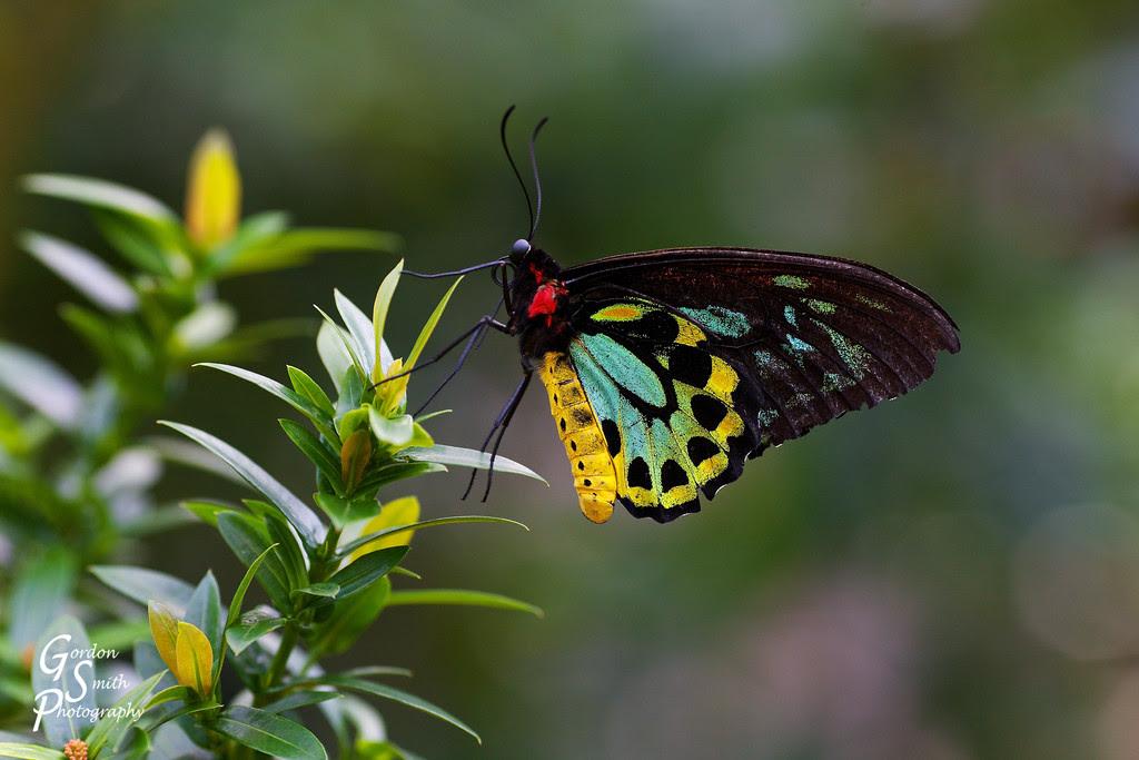 Butterfly Key West Florida