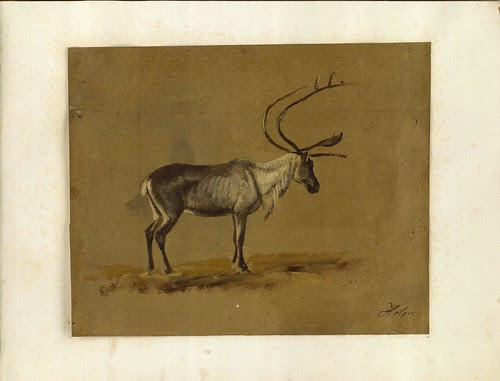 sketch of stag - 19th century