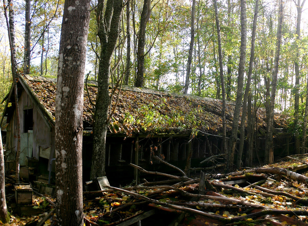The Abandoned Mink Farm