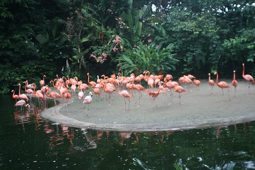 Flamingos Jurong Bird Park